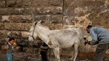 Meet the man grooming Cairo's donkeys