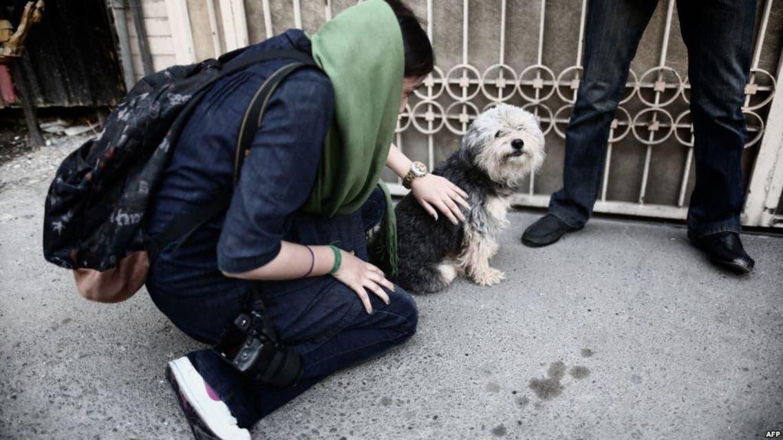 كلب كلاب إيران طهران