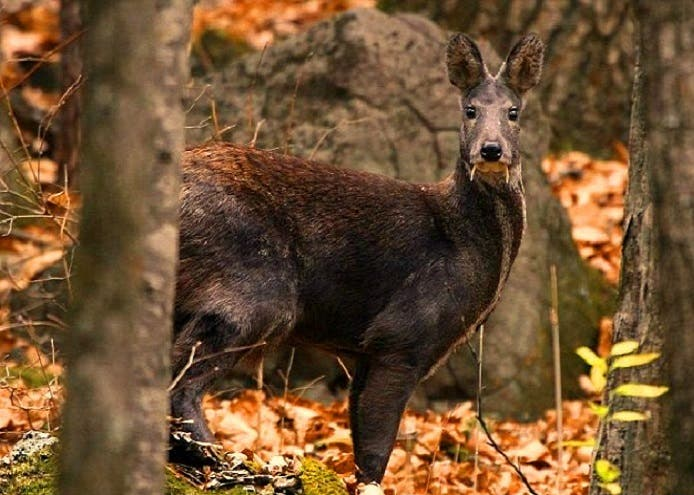 وحين شاهد الفريق العلمي ذكرا في الغابة وجدوه حذرا الى درجة أن تصويره كان صعبا جدا