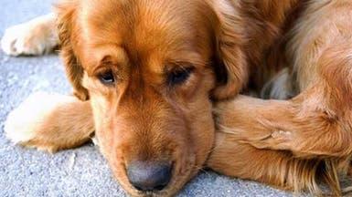 بكاء الأطفال يصيب الكلاب بالتوتر