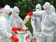 مصر.. 4 وفيات جديدة بإنفلونزا الطيور