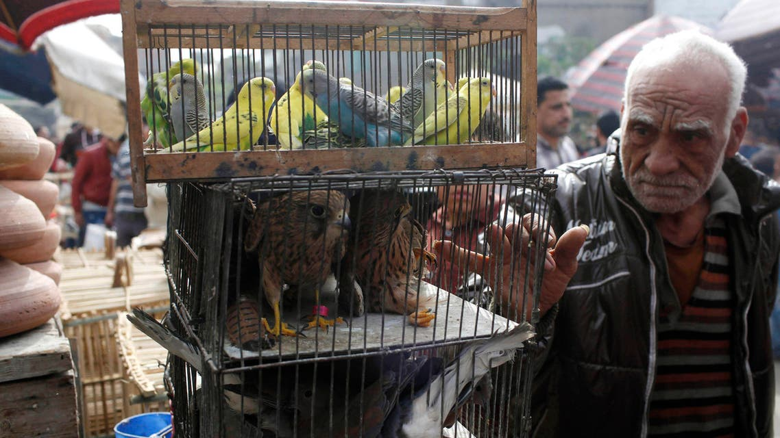 A man looks at birds displayed for sale at a market in Old Cairo, November 7, 2014.