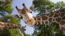 Giraffes on a plane to Qatar? Interpol releases most wanted list