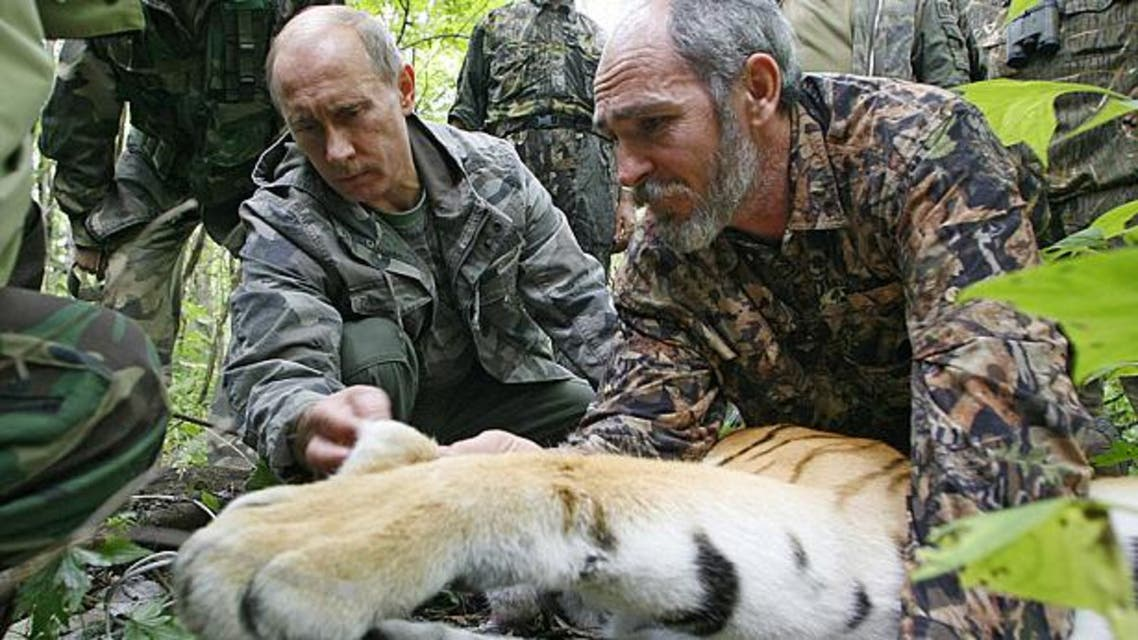 Russian Prime Minister Vladimir Putin fixes a GPS-Argos satellite transmitter onto a tiger during his visit to the Ussuriysky forest reserve of the Russian Academy of Sciences Photo: AFP
