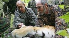 Putin's tiger kills 15 goats in northeast China