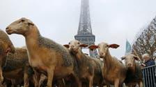 فرانس: بھیڑوں کا بھیڑیوں کے خلاف احتجاجی مظاہرہ