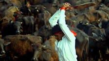 """نيبال """"الداعشية"""" تقطع رؤوس ربع مليون حيوان بيومين"""