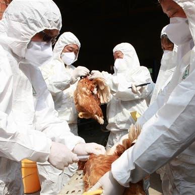 بعد كورونا.. الصين تحتضن سلالة جديدة من إنفلونزا الطيور