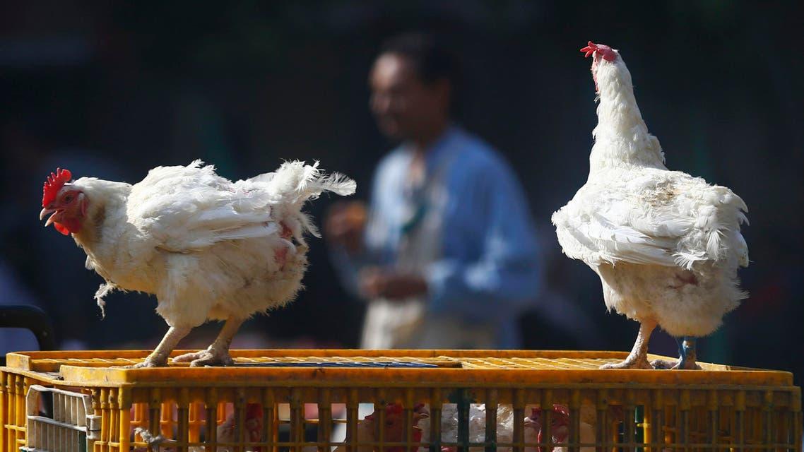 bird flu egypt REUTERS