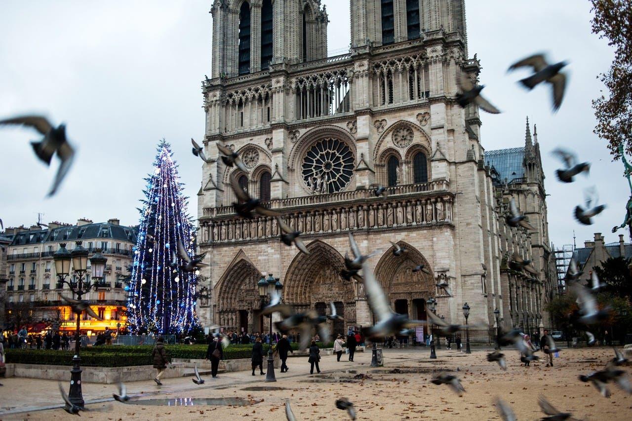 شجرة الميلاد في كاتدرائية السيدة العذراء في باريس