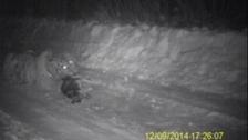 Putin's tiger eats 'domestic dog'