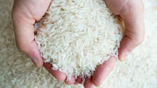 Iraq issues tender to buy at least 30,000 tons of rice