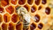 Beekeepers make Saudi honey festival a sweet success