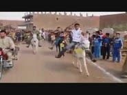 بالفيديو.. أول سباق للحمير في مصر