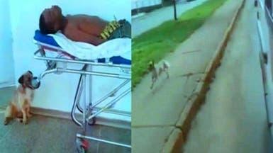الكلب الذي طارد سيارة الإسعاف حتى رافق صاحبه المريض