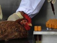 مصر.. 33 وفاة بإنفلونزا الطيور خلال 5 أشهر