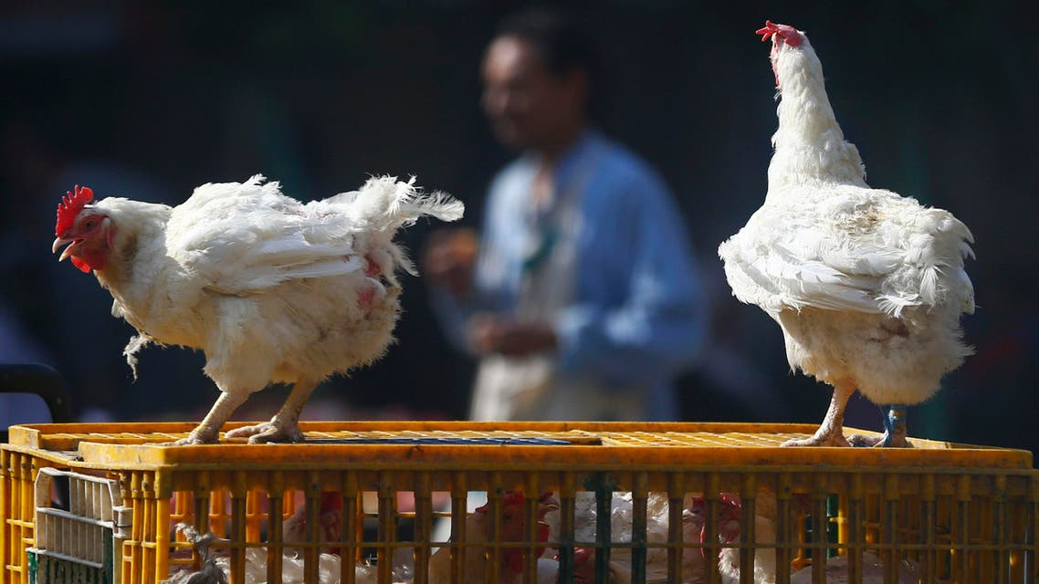 chicken chickens birds market bird flu egypt reuters