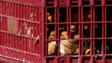 Egyptian child dies of H5N1 bird flu