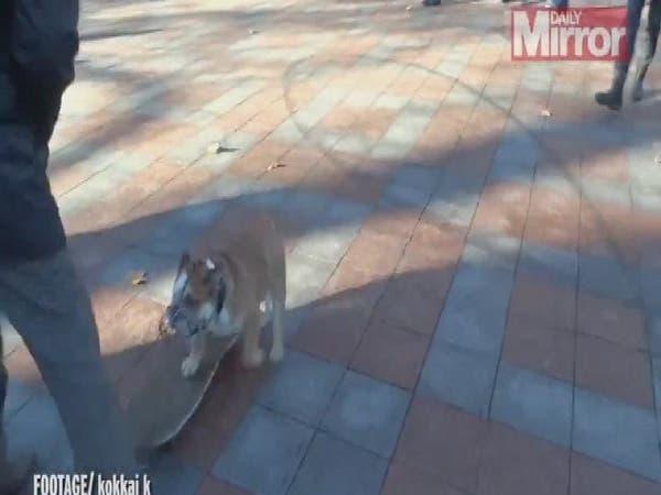 """بالفيديو.. طريقة طريفة لفض التظاهرات بطلها """"كلب"""""""