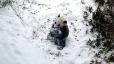 Baby panda sees snow for the first time in U.S. zoo