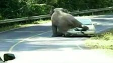 Video: Elephant crushes tourist car at Thai national park