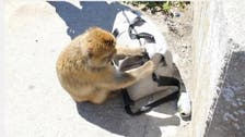 Video shows crafty monkey stealing sandwich from tourists