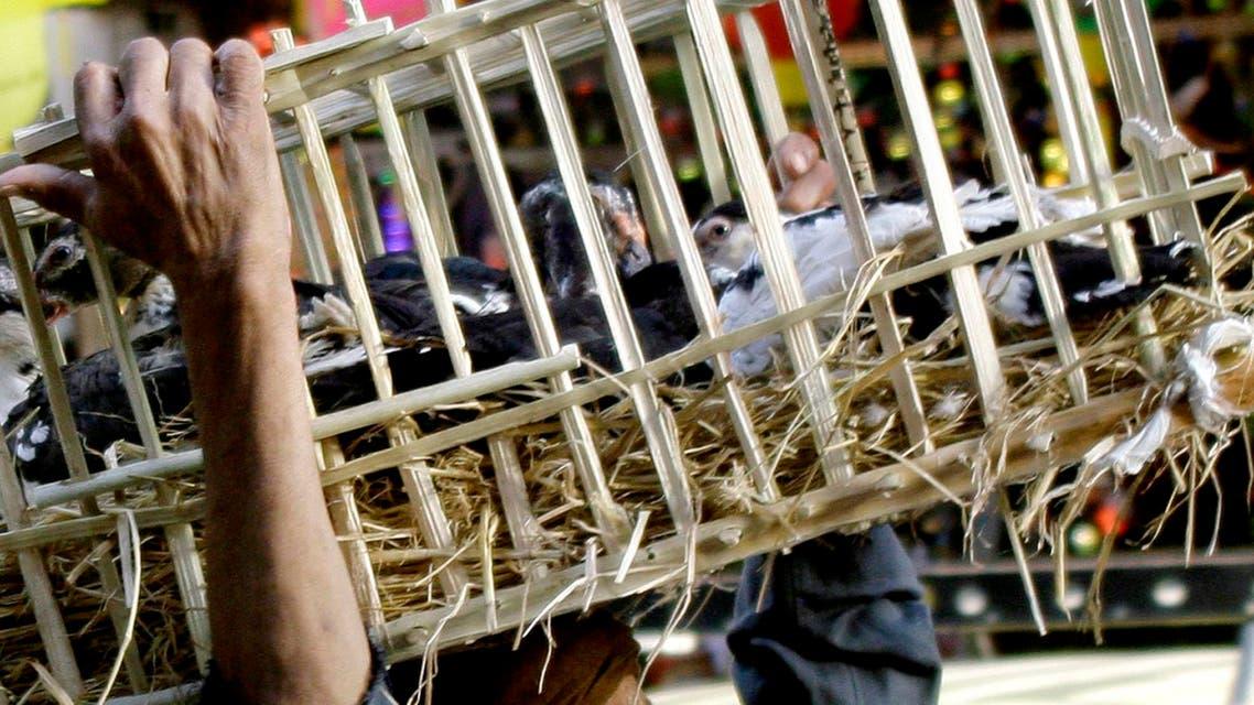 Egypt Bird Flu AP