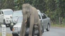 بالفيديو.. عندما تغضب الفيلة!