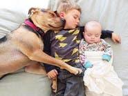 """بالصور.. القيلولة تجمع الكلب """"ثيو"""" مع صديقيه"""