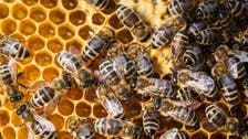 South Sudan finds hope in honey