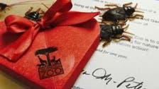 صرصور أو عقرب هدية لأصحاب القلوب المحطمة في عيد الحب