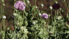 The U.S. heroin boom is forcing Mexican opium farmers to plant more