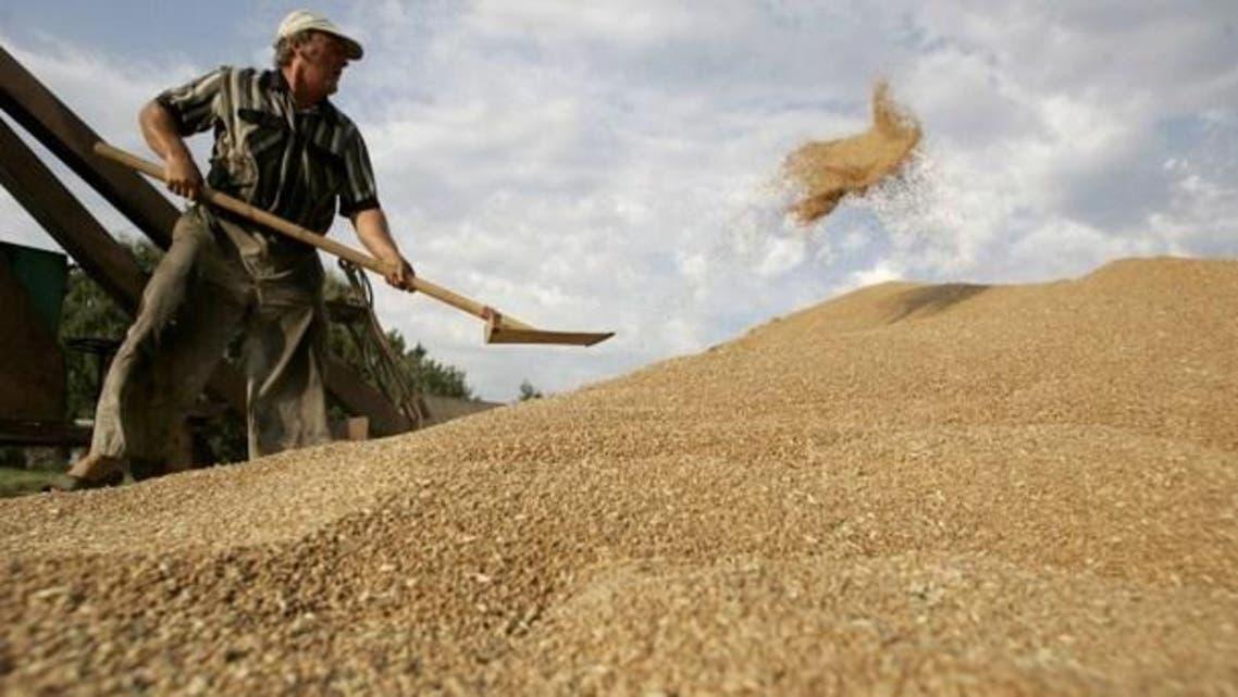 Hard wheat (File photo: AFP)