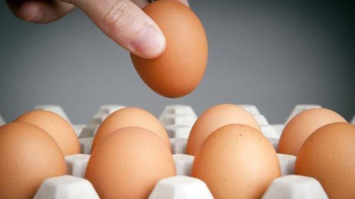 egg بيض