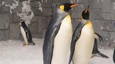 Love-stricken penguin proposes to his mate at Ski Dubai