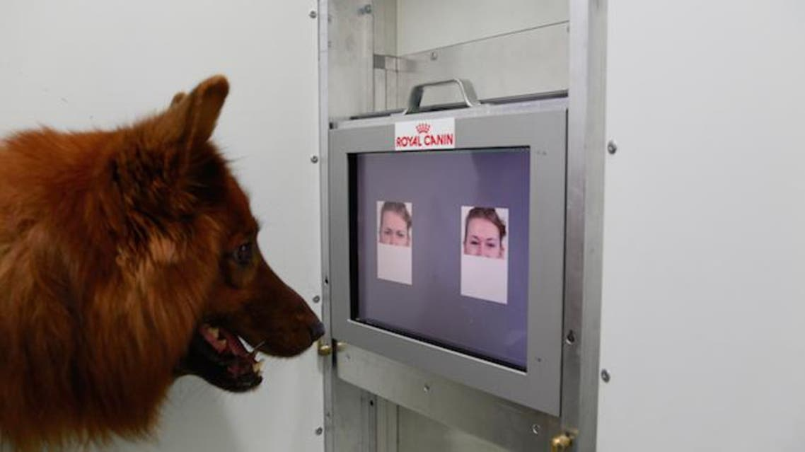 'Dogs can distinguish between happy and angry faces' - Study (Courtesy of News Discovery)