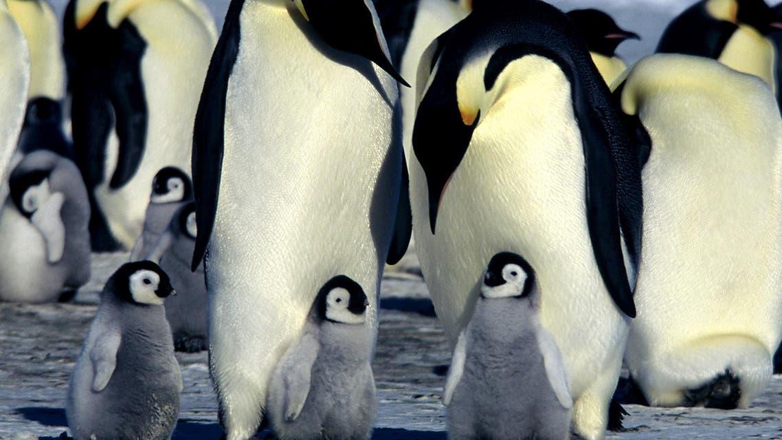 Penguins (AP/Warner Independent Pictures, Jerome Maison)