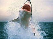 سمكة قرش تعقر سائحة أجنبية أثناء السباحة بالبحر الأحمر