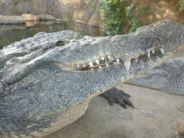 أميركا.. تمساح يقتل شابا في تكساس