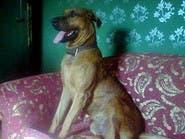 السجن 3 سنوات لذابحي الكلب في مصر