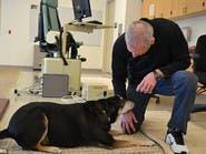 النظرات المتبادلة سر العلاقة الوطيدة بين الكلب والإنسان