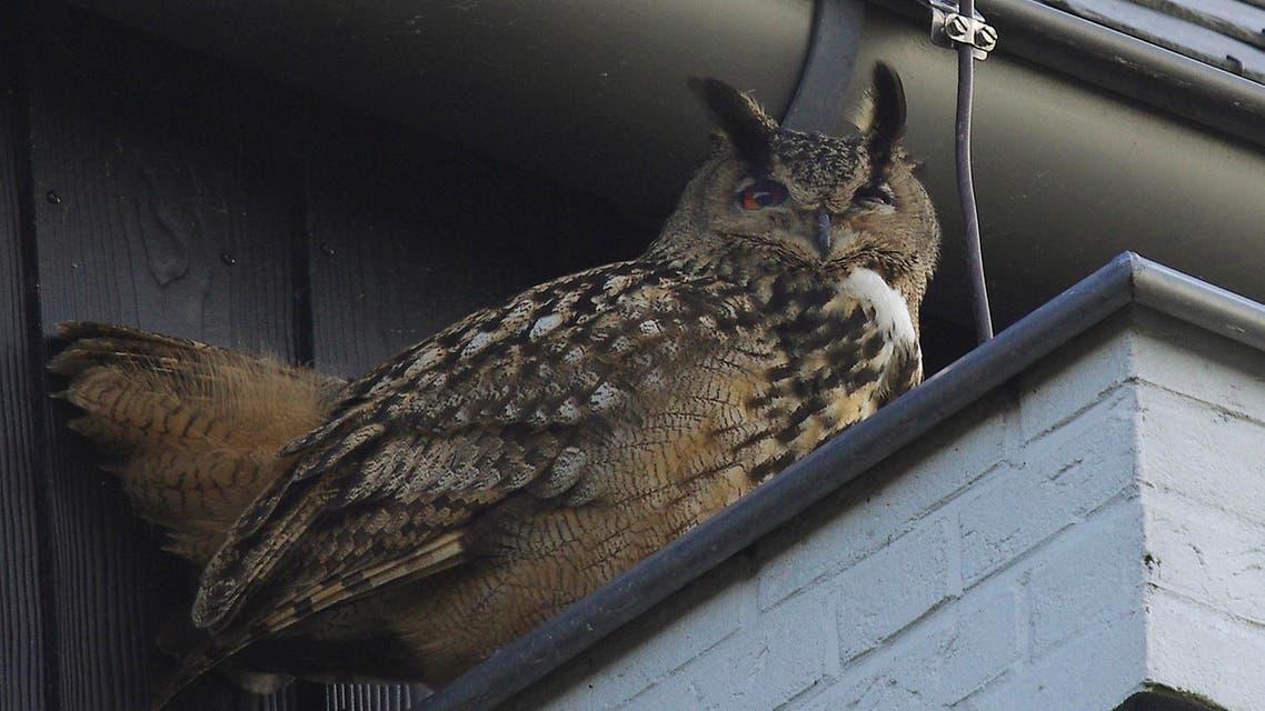 Owl Netherlands AP