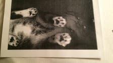 'Copycat'! scans of photocopied feline found at U.S. library