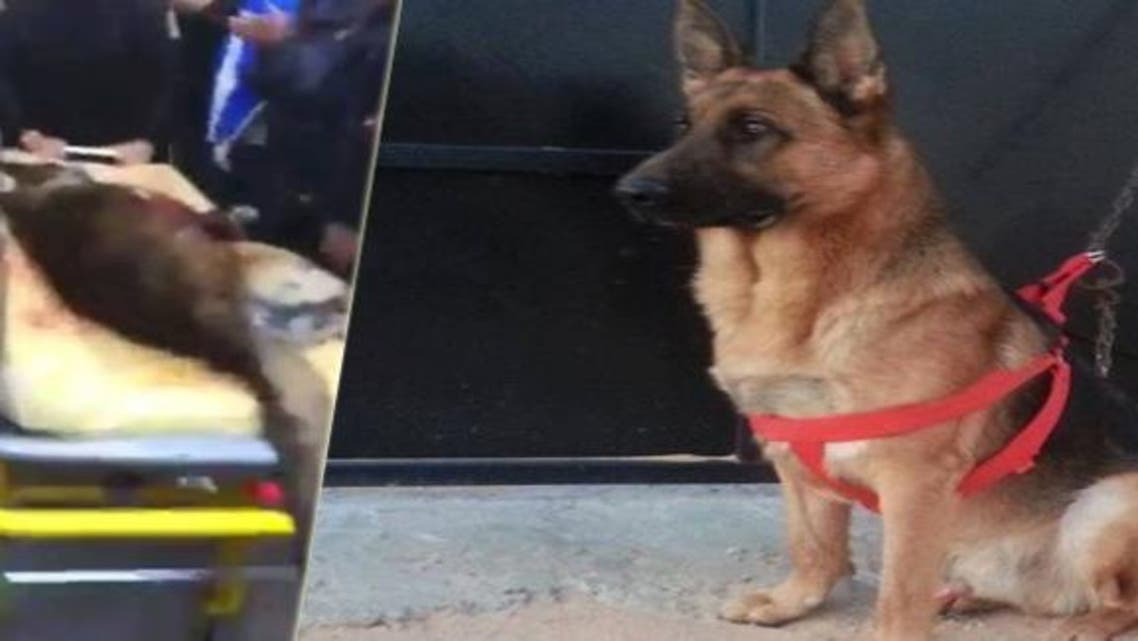 الكلب عقيل مات في عملية تحرير رهائن الباردو