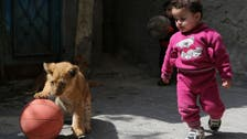 Lion cubs turn into stars of Gaza family