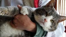 Famous fat cat in Turkey named 'Stone Head' loses weight