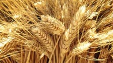Syria in talks for 100,000 tonnes grain swap deal with Italy