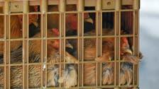 Niger isolates suspected bird flu farm as region takes precautions