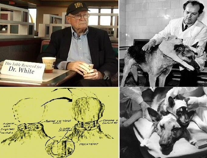 فلاديمير ديميخوف وكلبه الذي جعله برأسين، ونظيره الأميركي روبرت وايت، زارع أول رأس قرد