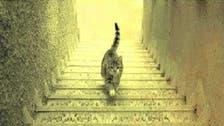 قطة #إيرانية تحدّت بصورتها العرب والأتراك وبقية العالم